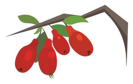Goji berries hand drawn design, illustration, vector on white background.