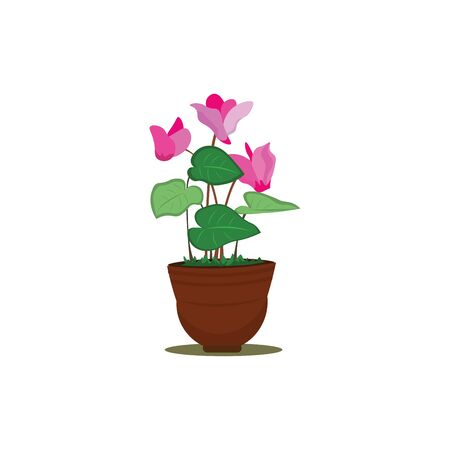 A pot of beautiful cyclamen flowers in pink colour with lot of leaves , vector, color drawing or illustration.