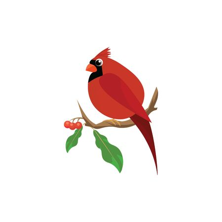 A cute fat cardinal bird with long tail sitting on a branch of cherries , vector, color drawing or illustration. Иллюстрация