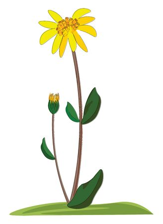 A small cute plant with arnica flower and bud , vector, color drawing or illustration. Ilustracja