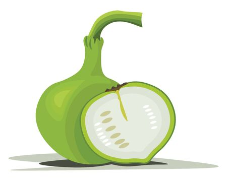 A bottle gourd which is not tall and a slice of vegetable cut beside it , vector, color drawing or illustration. Illustration