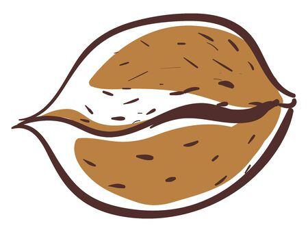 A sketch of a brown nut with lines on it , vector, color drawing or illustration.