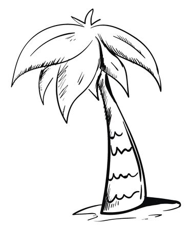 Sketch A palm tree has a crown of very long feathered or fan-shaped leaves has a sturdy trunk and grows above the soil over white background, vector, color drawing or illustration.