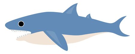 A shark with a streamlined body, forked tail, triangular-like and oval fins, blue and white, upper and underparts, respectively, exposes fang teeth, vector, color drawing or illustration.  イラスト・ベクター素材