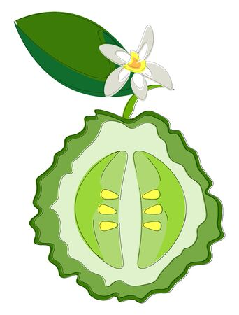 A slice of a bergamot orange, with stem and a leaf, with a flower, vector, color drawing or illustration.