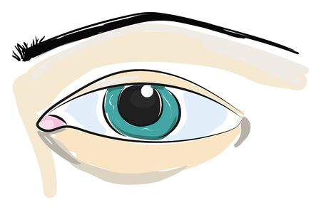An close up illustration of a blue eye and an eye brow, vector, color drawing or illustration.