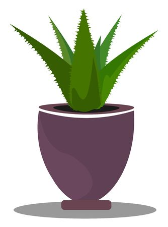 An aloe plant in a purple pot, vector, color drawing or illustration.