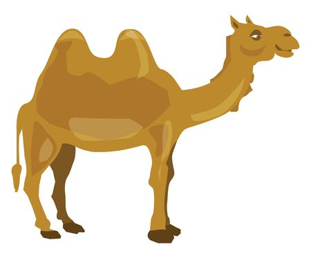 A brown camel from Dubai, with humps on its back, vector, color drawing or illustration. 일러스트