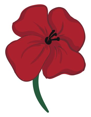 A painting of a red poppy flower with green stem and black pistils., vector, color drawing or illustration.