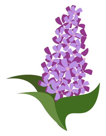 A group of purple flowers on three green leaves, vector, color drawing or illustration. Ilustrace
