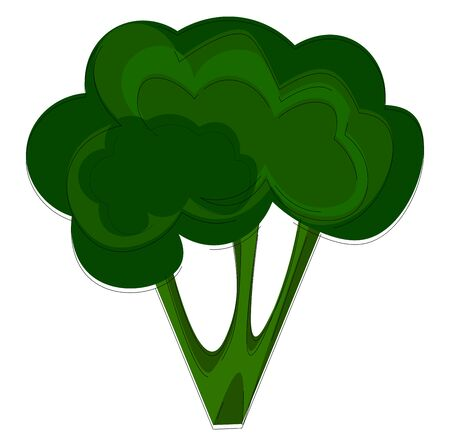 A whole broccoli, vector, color drawing or illustration. Çizim