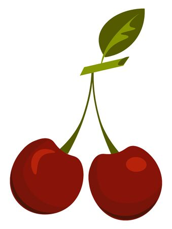 Two red cherry with a leaf, vector, color drawing or illustration.
