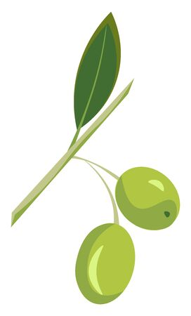 Two green olives in a branch with a leaf, vector, color drawing or illustration.