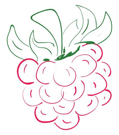 A sketch of a pink raspberry with green leaves, vector, color drawing or illustration.