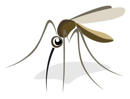 A brown mosquito with four legs and a long nose, vector, color drawing or illustration. Çizim