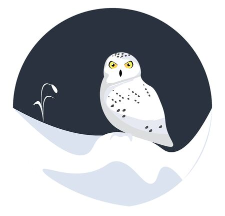 A white colored owl with yellow eyes and a black beak, vector, color drawing or illustration.
