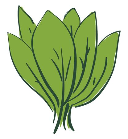 A bunch of green spinach leaves, vector, color drawing or illustration.