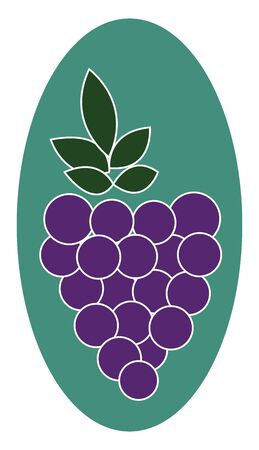 A colour illustration of grapes., vector, color drawing or illustration.
