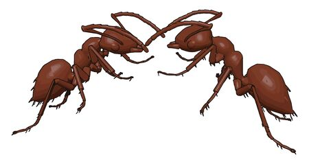Two ants fighting, illustration, vector on white background. 向量圖像