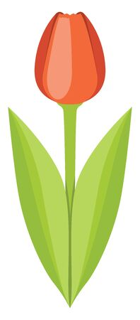 Poppy flower red in color with green leaves and a stem, vector, color drawing or illustration.