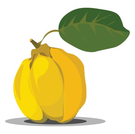 A hard yellow color pear shape fruit used in preserves, vector, color drawing or illustration. Çizim