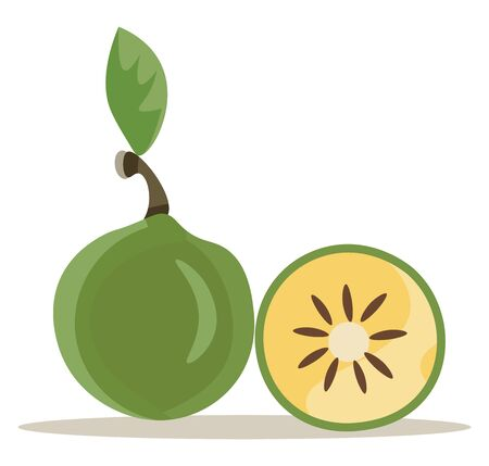 It is an edible thick shelled fruit, greenish-yellow color., vector, color drawing or illustration.