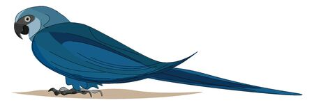 A blue and black color bird with long pointed tail, vector, color drawing or illustration.