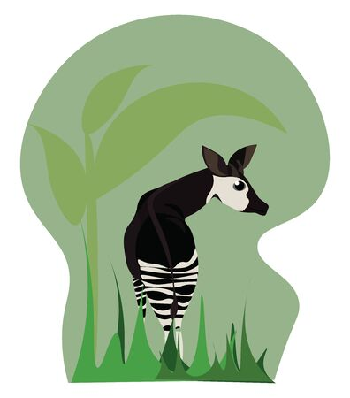 A okapi is Animal which has stripe marking on their legs, vector, color drawing or illustration.