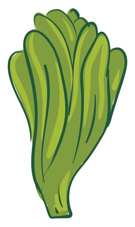 A green color long lettuce with many leaves. Eaten as salad, healthy and tasty, vector, color drawing or illustration.