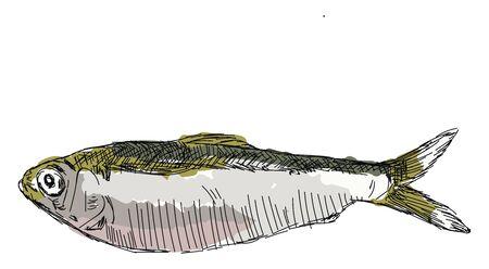 Alewife fish, illustration, vector on white background. Ilustracja