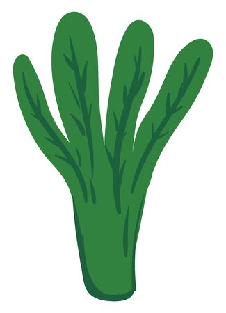 A bunch of spinach leaves, green in color, vector, color drawing or illustration.