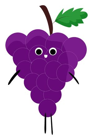 A colour illustration of grapes of Sinai, vector, color drawing or illustration.