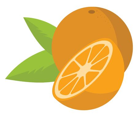 Orange with green leaves and a half cut orange. Healthy citrus fruit, vector, color drawing or illustration.