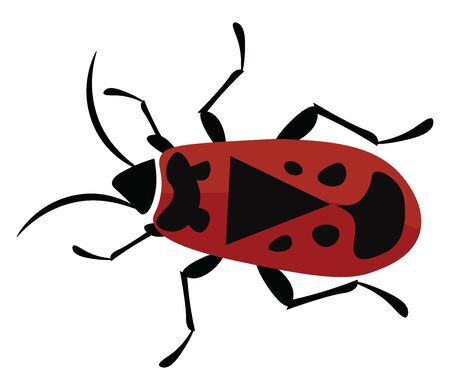 A colour illustration of a firebug, vector, color drawing or illustration.