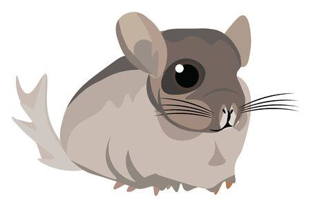 It is a small South American rodent with soft pearly grey fur and a long busy tail. It is bred in captivity for its valuable fur., vector, color drawing or illustration.