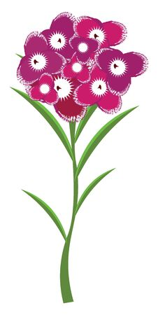 A carnation is plant with sweet scented white, pink or red flowers, often worn as a decoration of formal occasions., vector, color drawing or illustration. 矢量图像