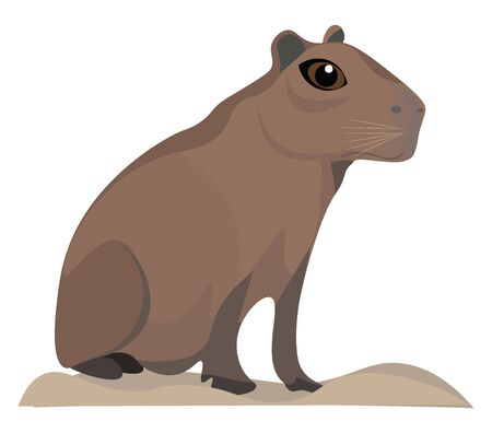 It is a pig-sized South American rodent and it is tailless., vector, color drawing or illustration. Illustration