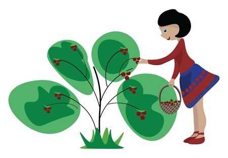 A colour illustration of a girl collecting berries., vector, color drawing or illustration.
