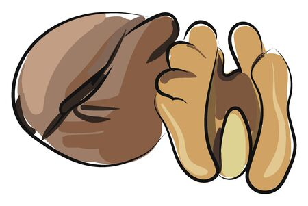 Two walnut brown in color, vector, color drawing or illustration.
