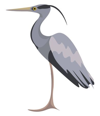 It is the long plumes that grow during the breeding season in white herons., vector, color drawing or illustration.