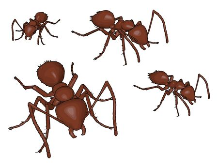 Four 3D brown ants, illustration, vector on white background.