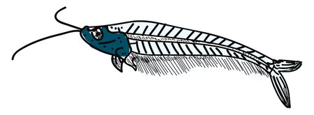 African glass catfish, illustration, vector on white background.