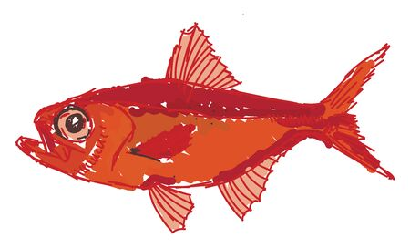 Red alfonsino fish, illustration, vector on white background.