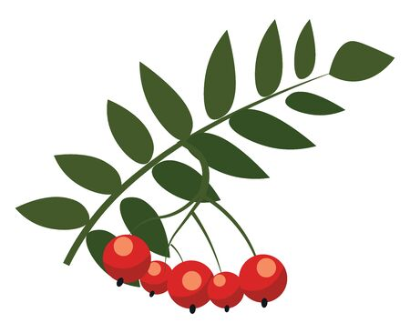 A small tree with white flowers and red berries, vector, color drawing or illustration. Illustration