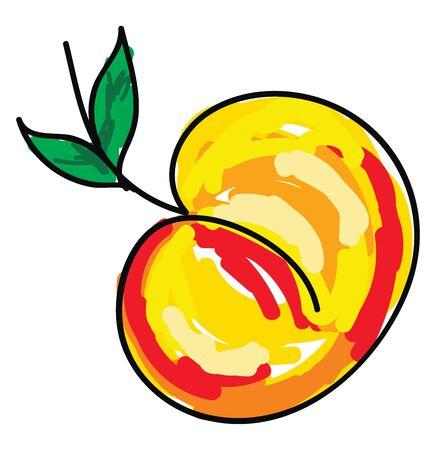 Apricot fruit, illustration, vector on white background.