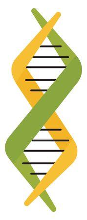 DNA, illustration, vector on white background.