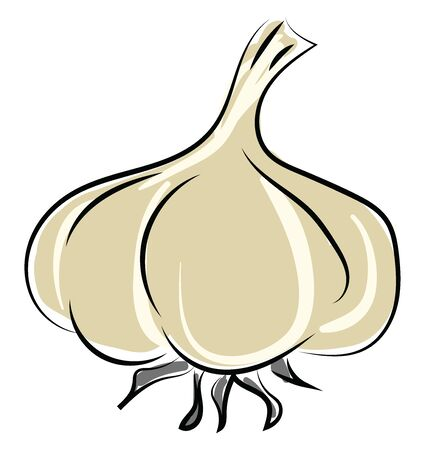 Garlic, illustration, vector on white background.