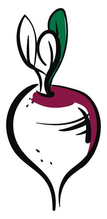 Draw beet, illustration, vector on white background.