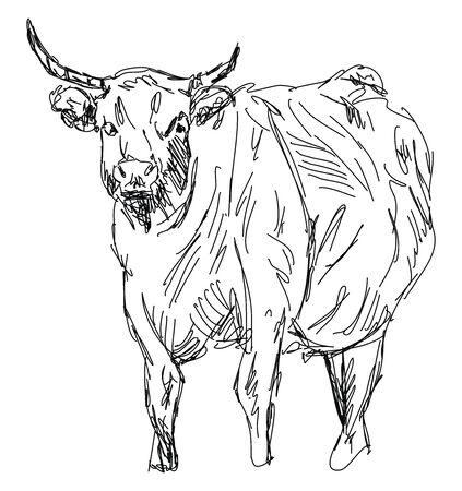 Büffelzeichnung, Illustration, Vektor auf weißem Hintergrund.