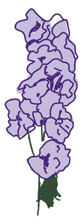 Larkspur, illustration, vector on white background.